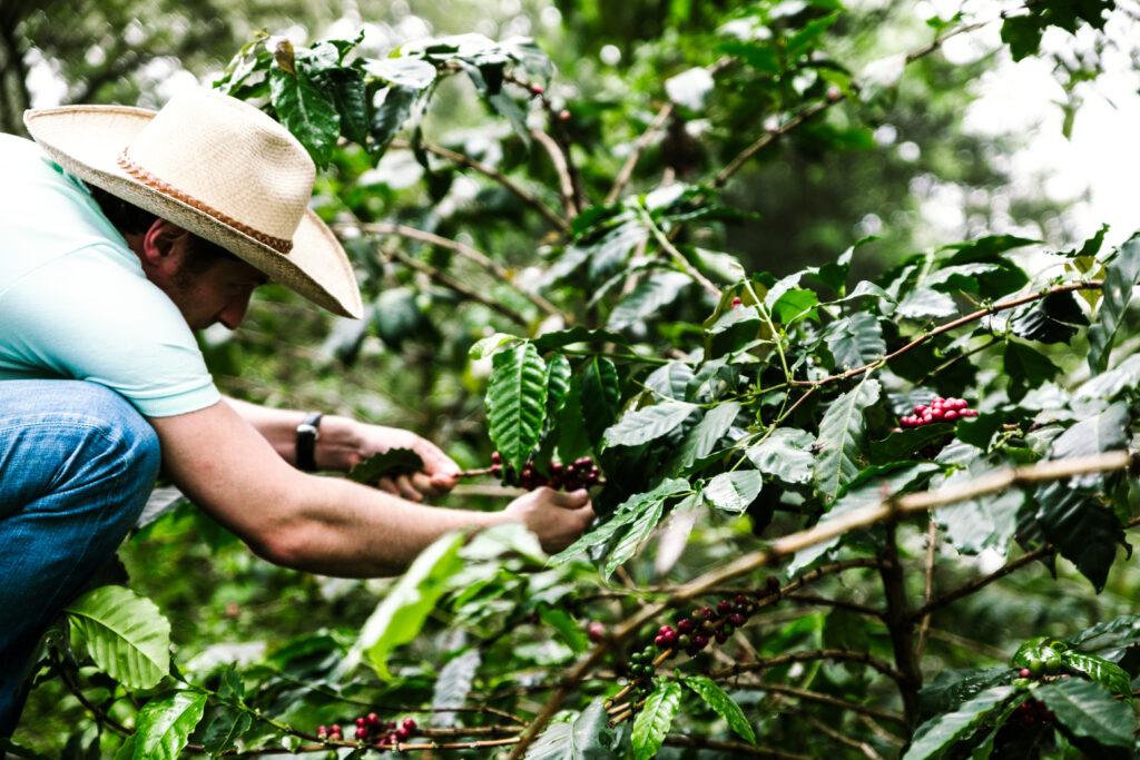 Kaffeeanbau Ernte Farmer